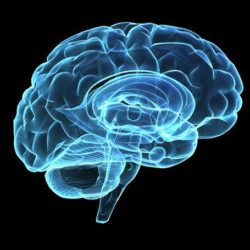 Animated photo of the human brain. meditation really does produce measurable changes in our most important organ.